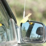 This bird was determined that his reflection was a rival and would not stop attaking it.